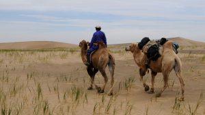 mongolia-831286_640