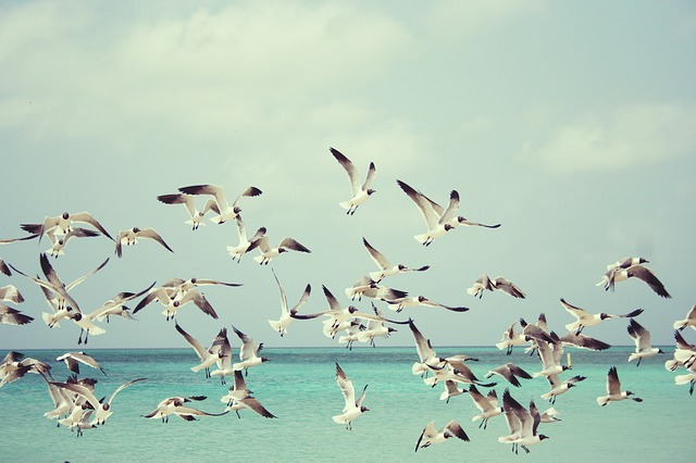 Je lance ma joie vers le ciel